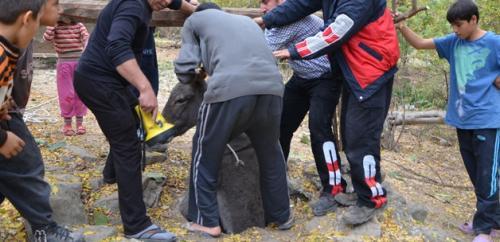 Adana'da eşek kurtarma operasyonu!