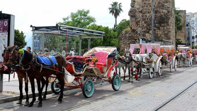 Kuşadası'nın ardından Antalya'da atlara işkence yapmaya son verildi