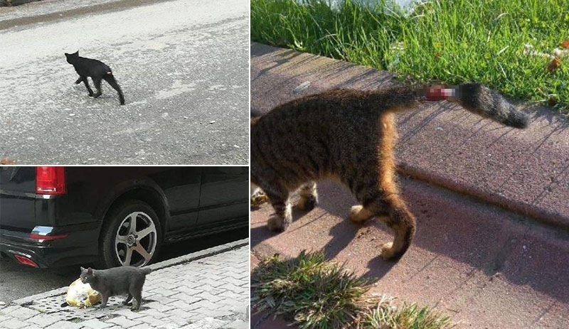 Mahalleli: Falcılar büyü yapmak için kedilerin kuyruklarını kesiyor