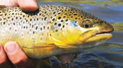Mahkemeden HES kararı: Balıklar bu strese dayanamaz
