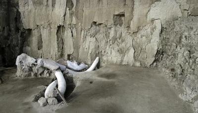 Mamut fosillerinden DNA elde edildi