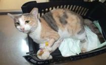 Marmaris'te kediye tecavüz edildi!