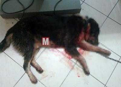 Medyabar isimli sitede yalan köpek haberi