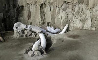 Meksika'da mamut kalıntıları bulundu