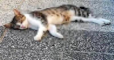 Mersin'de 15 kedi ve kuş zehirlenerek öldürüldü!