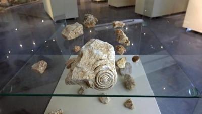 Mersin'de 60 milyon yıllık salyangoz fosili bulundu