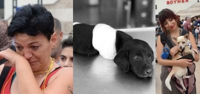 Mersinli hayvan hakları savunucularından kesilen köpek için eylem!
