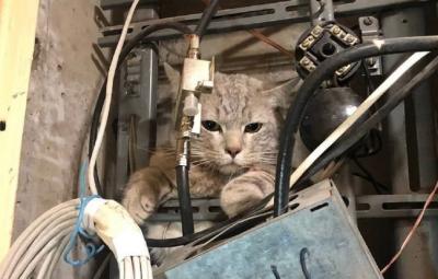 Moskova'da bir kedi dağıtım paneline girdi: Evler internet ve kablolu televizyonsuz kaldı