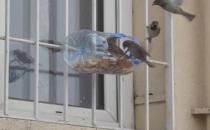 Öğretmenden öğrencilere: Kışın sokaktaki hayvanları unutmayın!