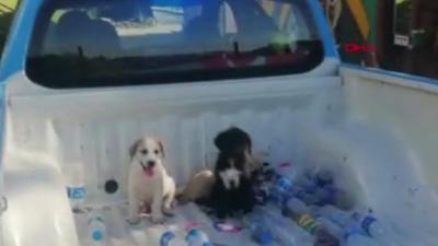Ormana terk edilen yavru köpekleri belediye aldı