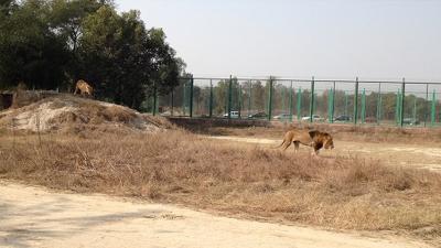 Pakistan'da 17 yaşındaki gencin kemikleri aslan kafesinde bulundu