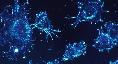 Prof. Dr. Rahmi Öklü, kanserli dokuyu yok eden ilaç geliştirdi