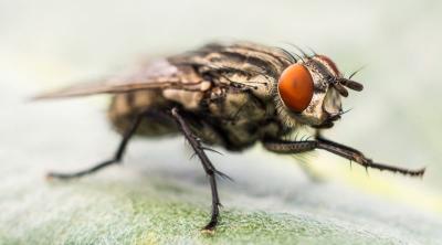 Prof. Dr. Satar: Covid-19 böcek ve sineklerle taşınabilir
