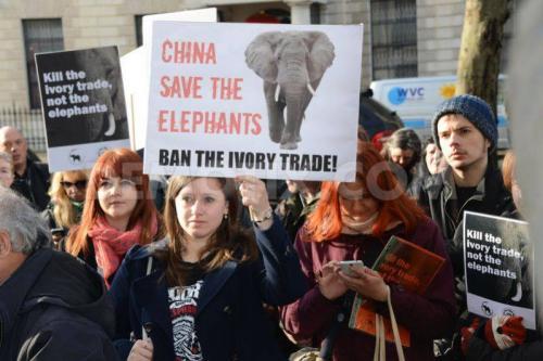 Londra'da fildişi protestosu!