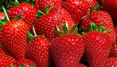 Rusya, Türkiye'den gönderilen 60 ton domates ve çileği yine iade etti