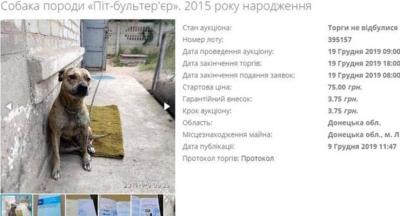 Sahiplerinin doğalgaz borçları yüzünden iki köpek haczedildi