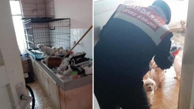 Satıldığı tespit edilen 'Maltese Terrier' cinsi 23 köpek ele geçirildi