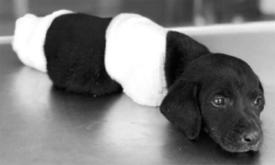 Sezgin Tanrıkulu: Hayvan öldüren 8 yıla kadar hapis cezası alsın