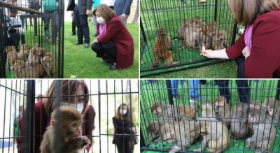 Sınırda ele geçirilen 12 maymun, Gaziantep Hayvanat Bahçesi'ne hapsedildi