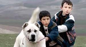 Hayvan özgürlükçülerinden Sivas filmine tepki!
