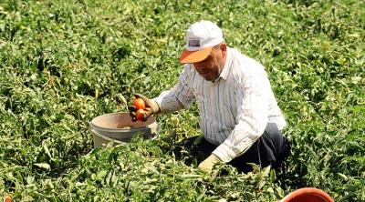 Son 8 yılda her 100 çiftçiden 22'si tarımı bıraktı