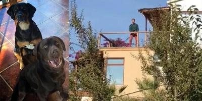Tanem Sivar'ın köpeklerini zehirleyen sanığın 3 yıl hapsi istendi