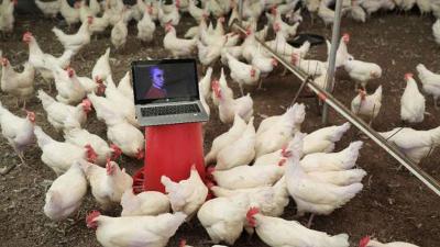 Tavuklar için opera sanatçısına klasik müzik repertuvarı hazırlattı