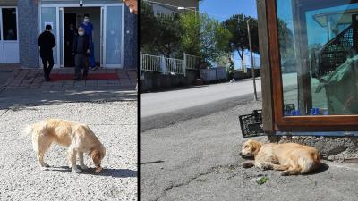 Tedavi gören bakıcısını 5 gündür hastane bahçesinde bekleyen köpek ortadan kayboldu