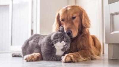 Türk Veteriner Hekimleri Birliği: Evcil hayvanlarda koronavirüs görülmedi