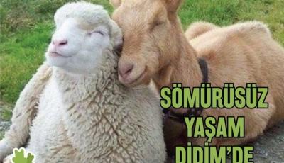 Türkiye'nin ilk vegan festivali Didim'de