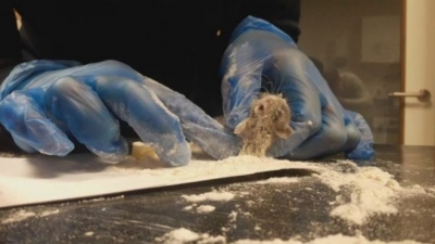 Tuzağa düşürdüğü fareye üzülerek hayvan ambulansını aradı