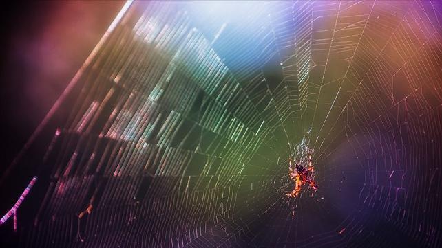 Üç yeni örümcek türü keşfedildi