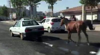 Urfa'da ata işkence: Otomobilin arkasına bağladılar!