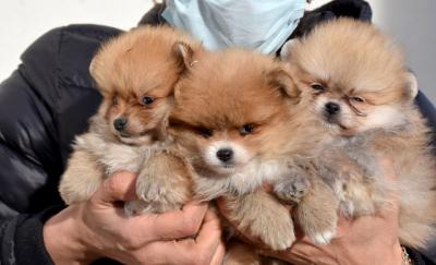 Uyuşturulup, kaçak olarak Türkiye'ye getirilen yavru köpekler tedaviye alındı