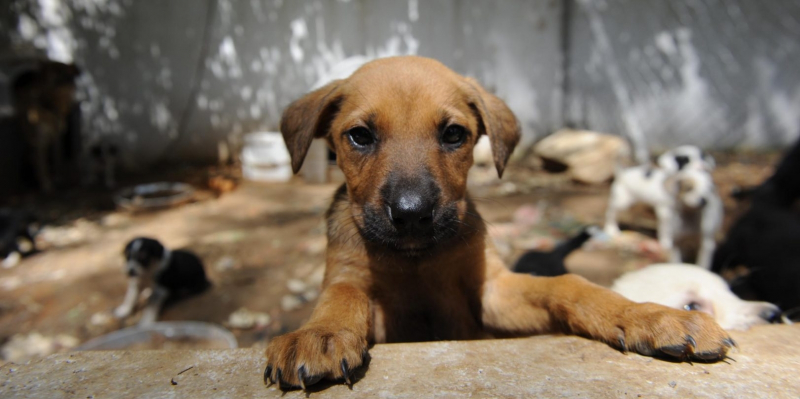 Veterinerlerden ilkokullara 'hayvan sevgisi dersi' önerisi