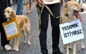 Veysel Eroğlu 'Hayvan hakkı ihlallerini bize bildirin' derken hayvan haklarını ihlal etti!