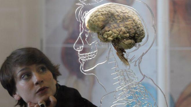 Vücut yağlarıyla beyin küçülmesi arasında ilişki bulundu