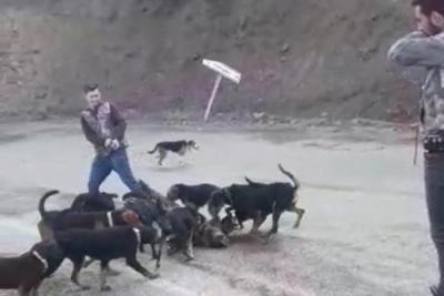 Vurdukları yavru domuzu köpeklere parçalatanlara para cezası