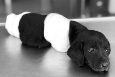 Yavru köpeği öldürmekle suçlanan kepçe operatörü tutuklandı