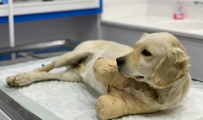 Yavru köpeğin kesilen patileri için verilen 809 TL cezaya 4 taksit