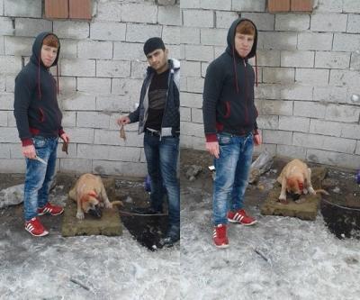 Yavru köpeğin kulağını kesen saldırganlar Facebook sayfasında paylaştı