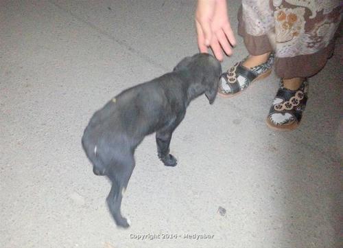 Pamukova İlçe Hastanesi'nde köpeğe işkence!