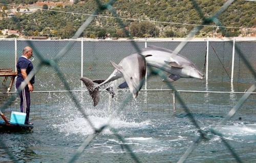 Yunanistan yunus gösterilerini yasakladı!