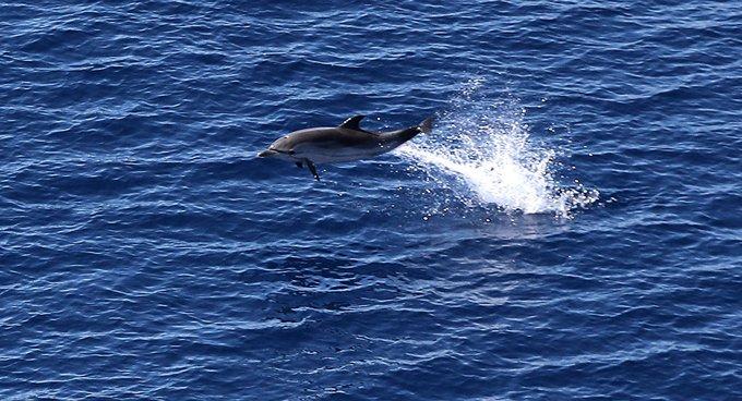 Yunus balığının ölümüne neden olan kaptana 15 bin dolar  para cezası