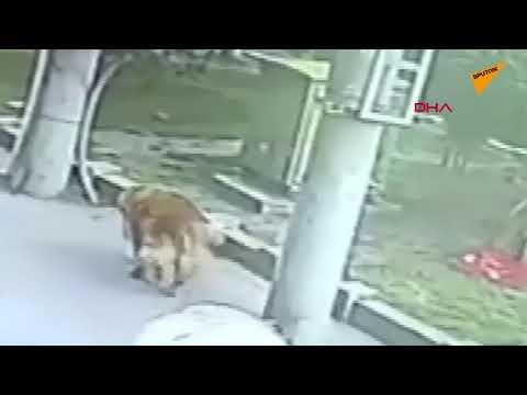 Başına kedi düşen adam, 23 gün hastanede kaldı
