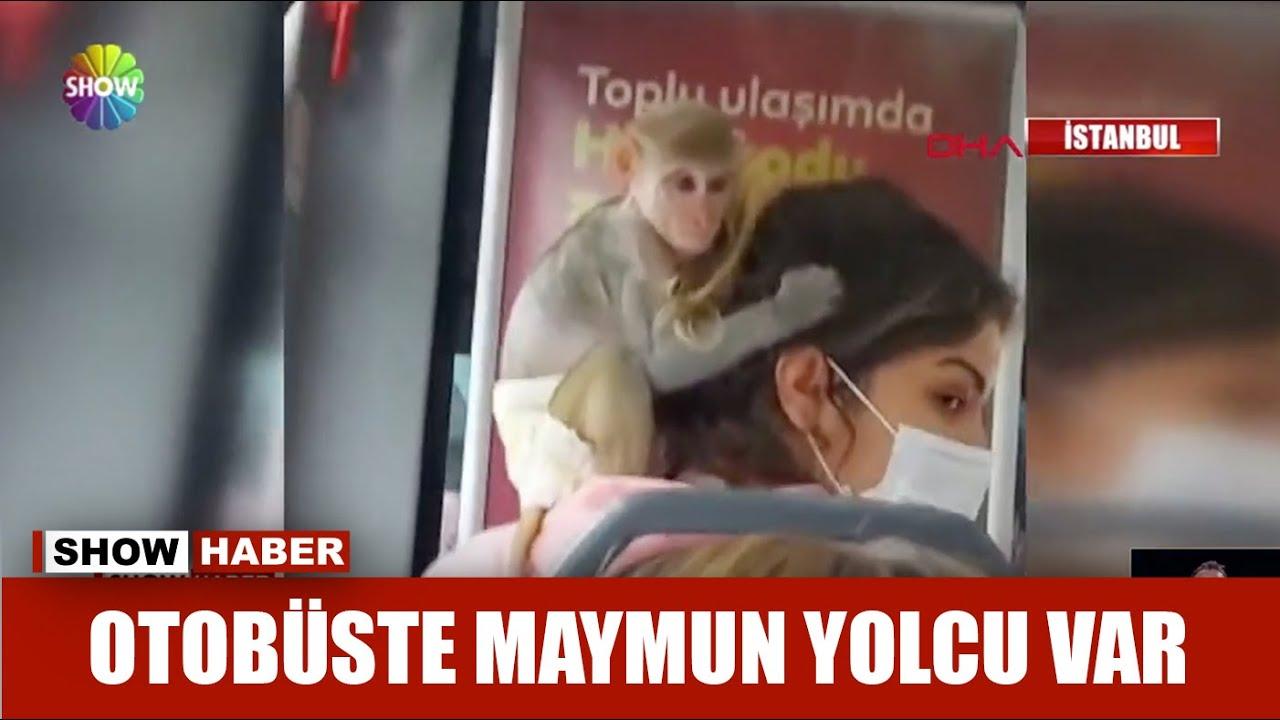 İstanbul'da bir kadın, İETT otobüsüne maymunla bindi