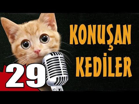Konuşan Kediler 29 - En Komik Kedi Videoları